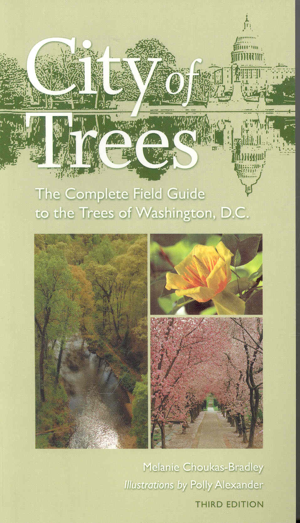 City of Trees By Choukas-Bradley, Melanie/ Alexander, Polly (ILT)